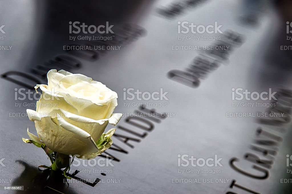 Memorial Rose stock photo