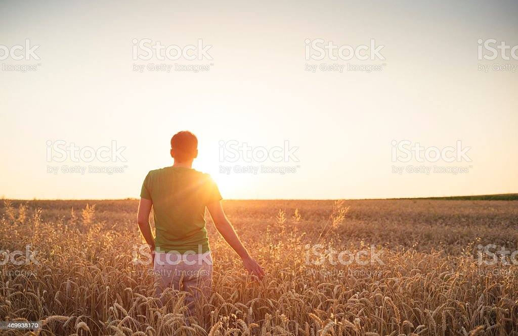 Men admiring the sunset among fields of wheat stock photo