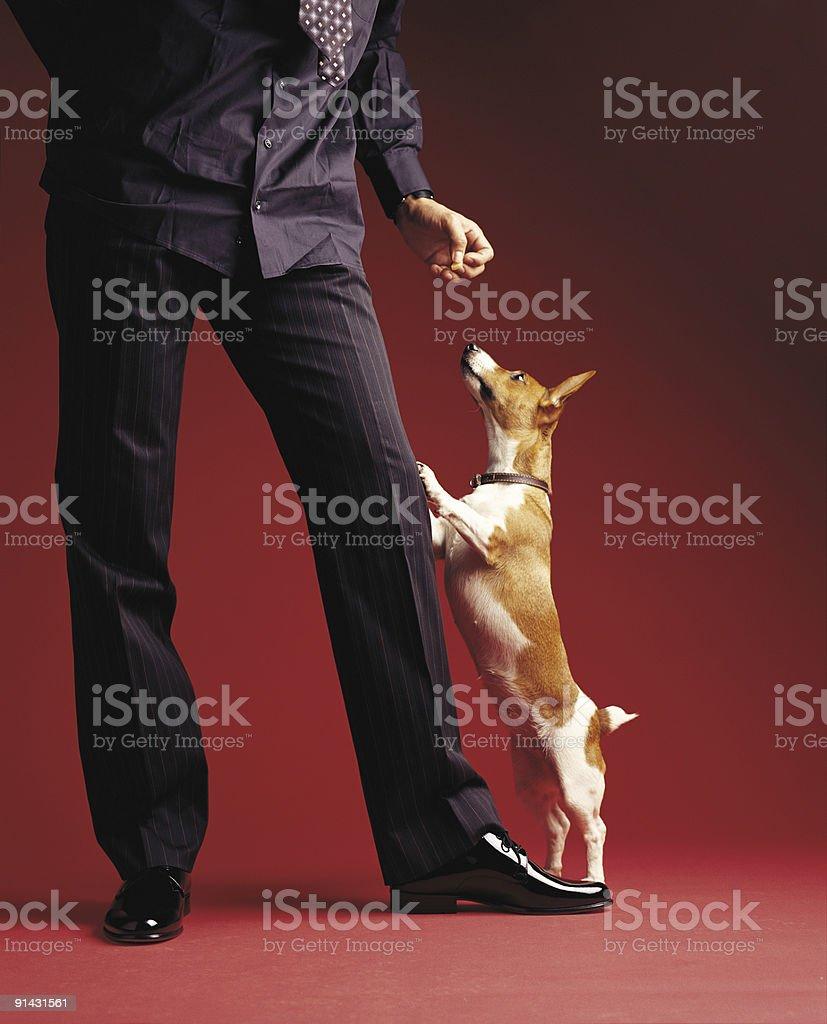 Men with dog stock photo