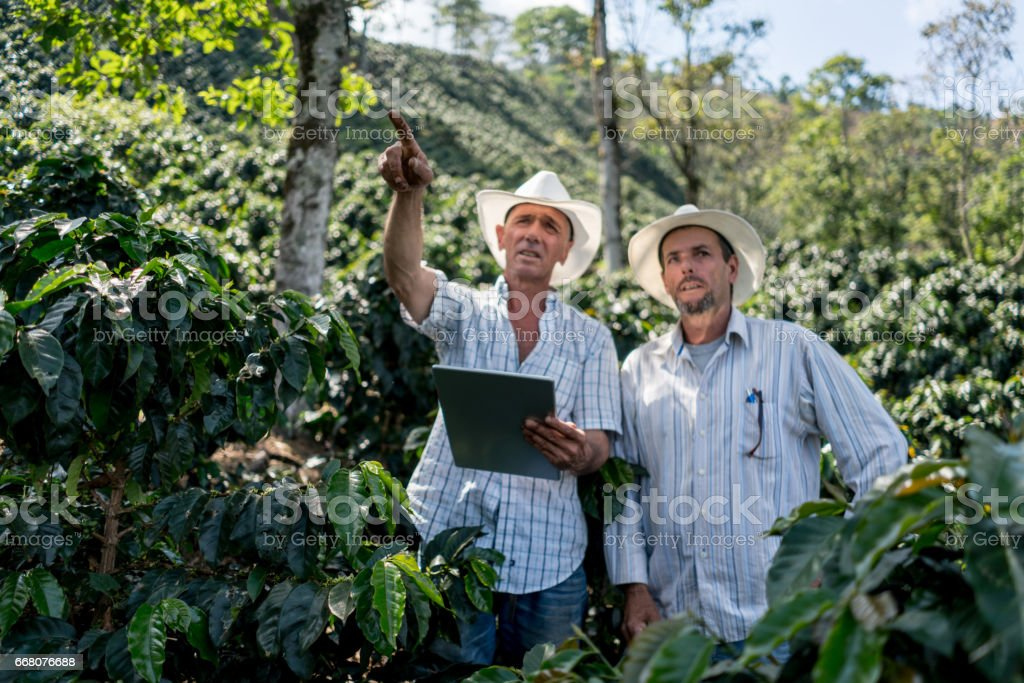 Men working at a coffee farm stock photo
