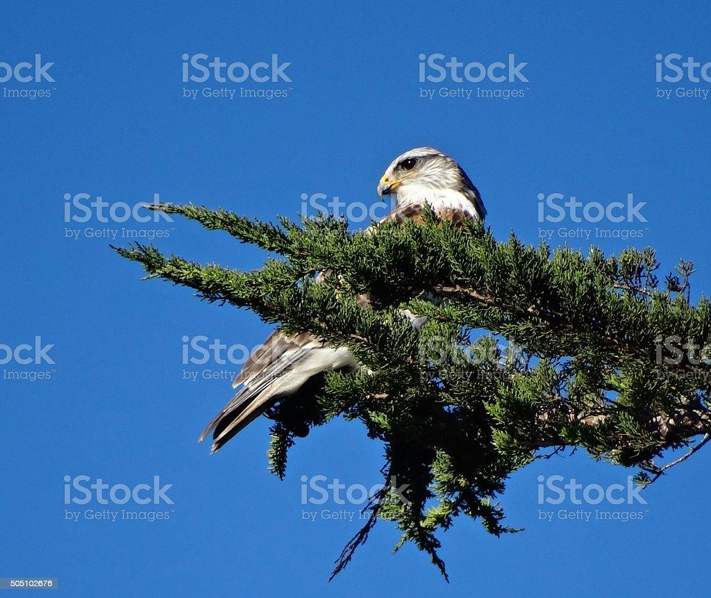 Mendocino Coast Bird stock photo