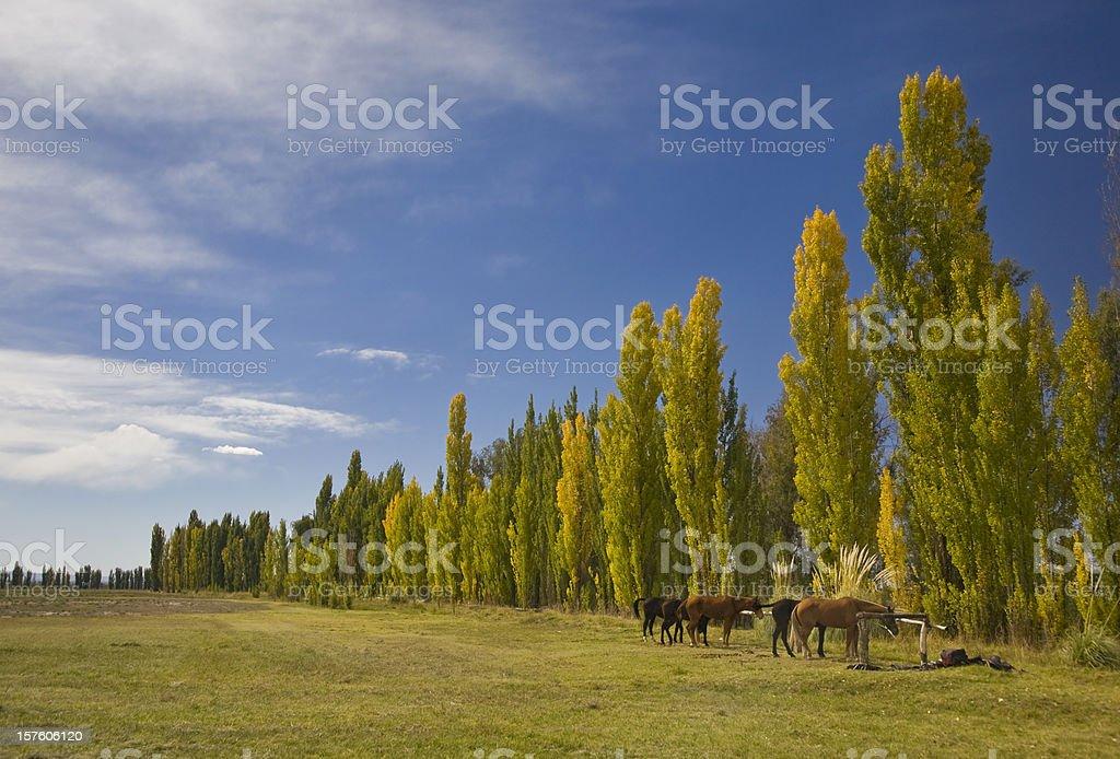 Mendoza royalty-free stock photo