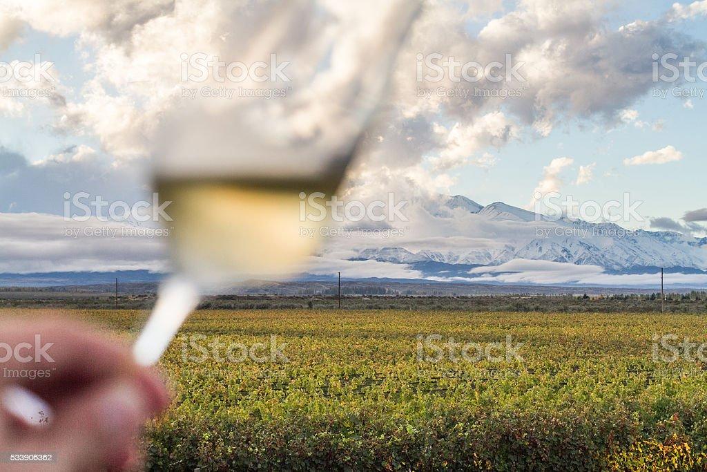 Mendoza Vine stock photo