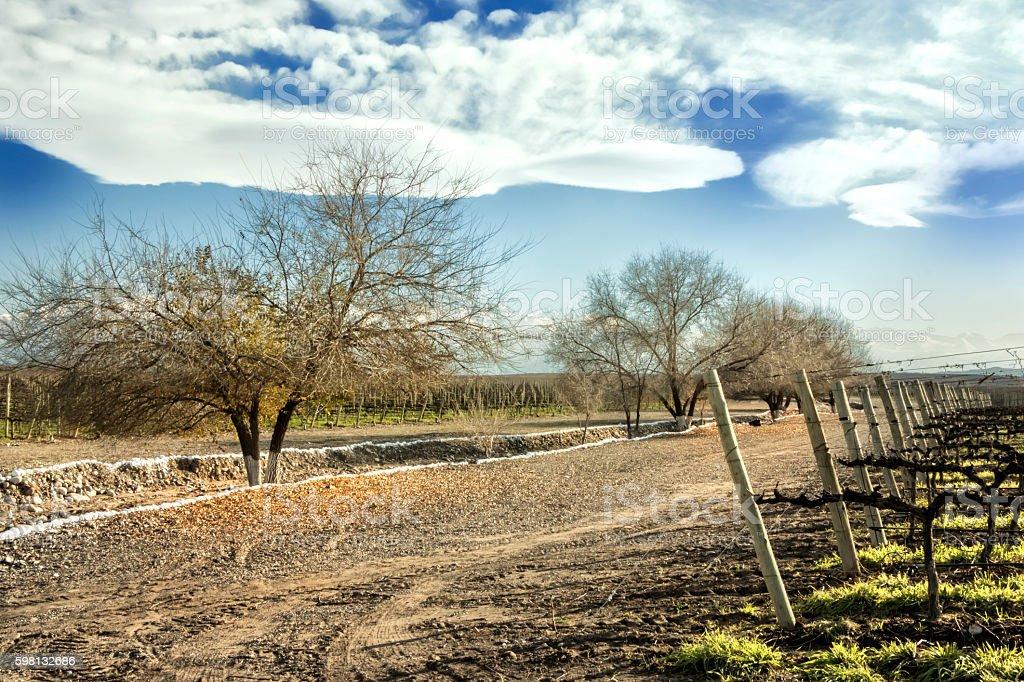 Mendoza, vineyards land stock photo