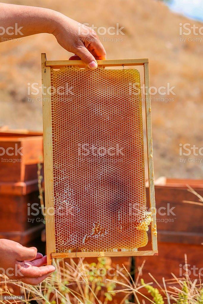 Men's hands hold honey comb 1 stock photo