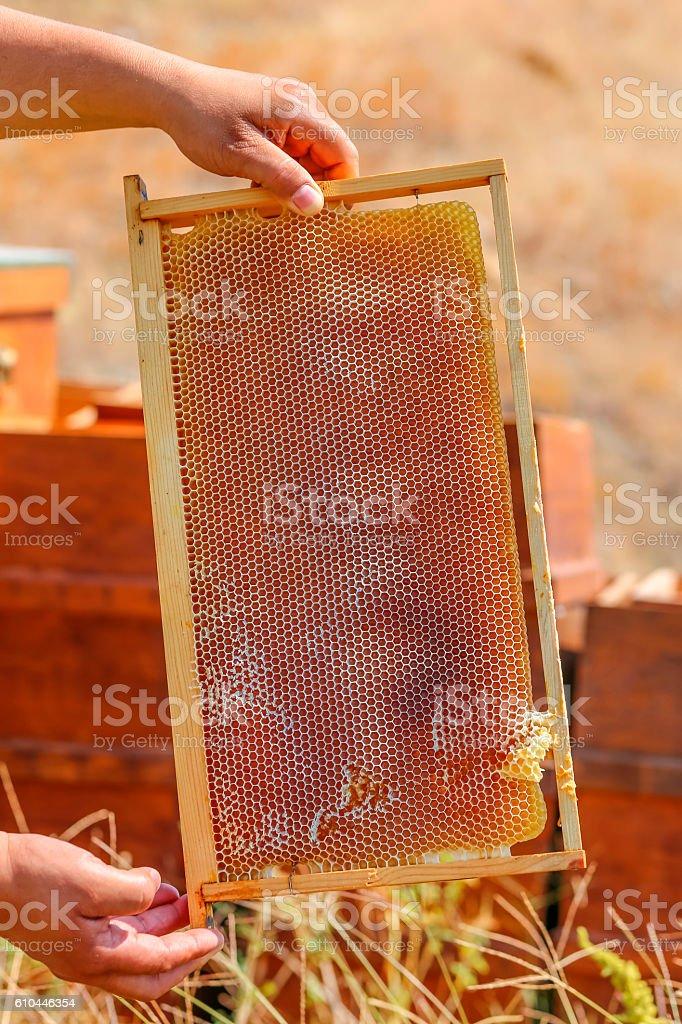 Men's hands hold honey comb stock photo