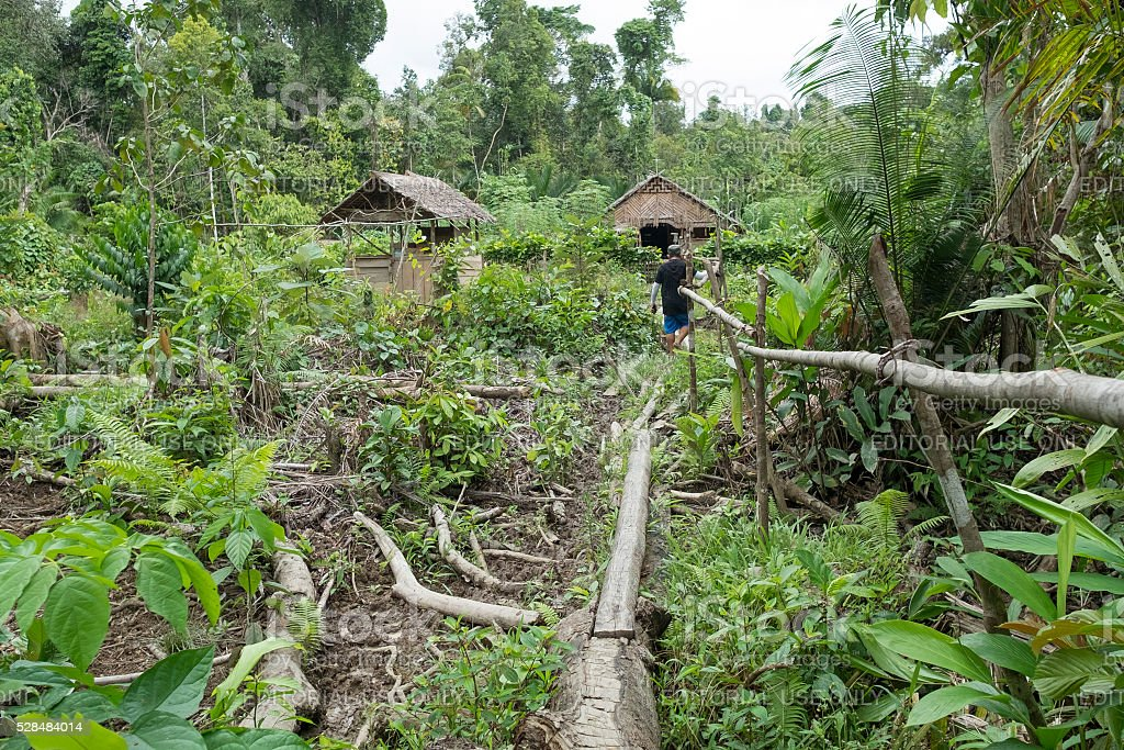 Mentawai tribe house in the deep of the jungle. stock photo