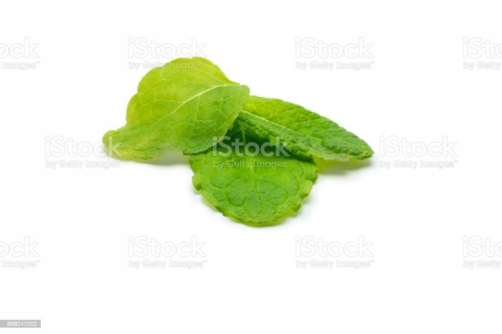 Mentha leaves, Fresh mint on white background stock photo