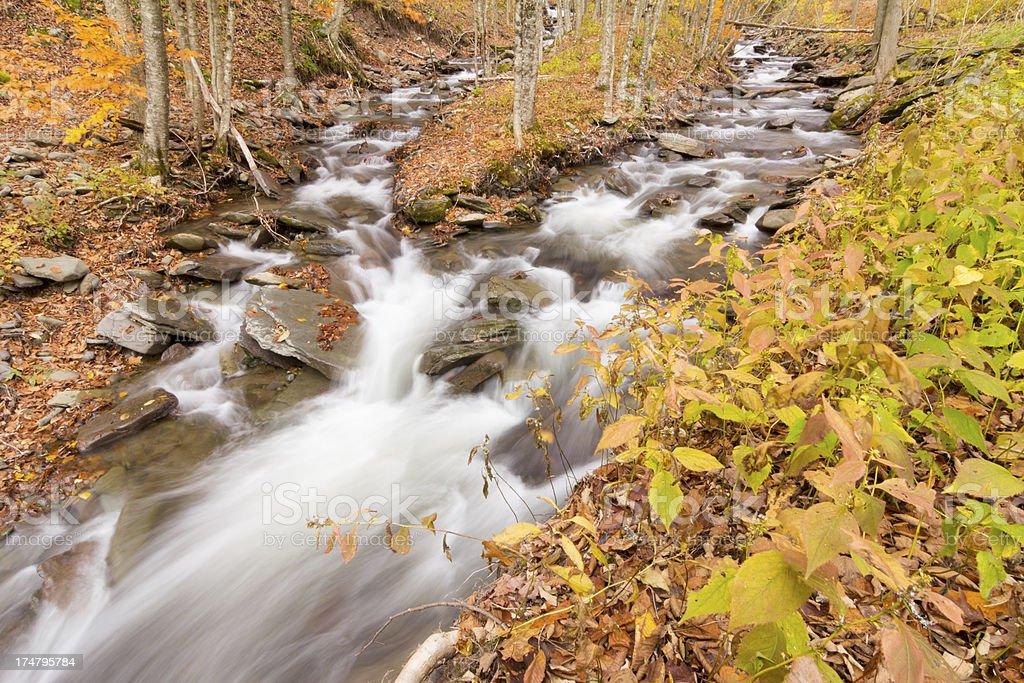 Merging Fall Streams royalty-free stock photo