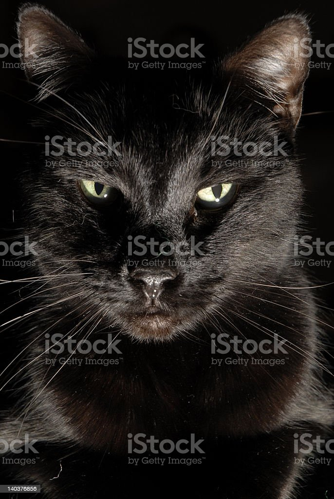 Merlin is watching royalty-free stock photo