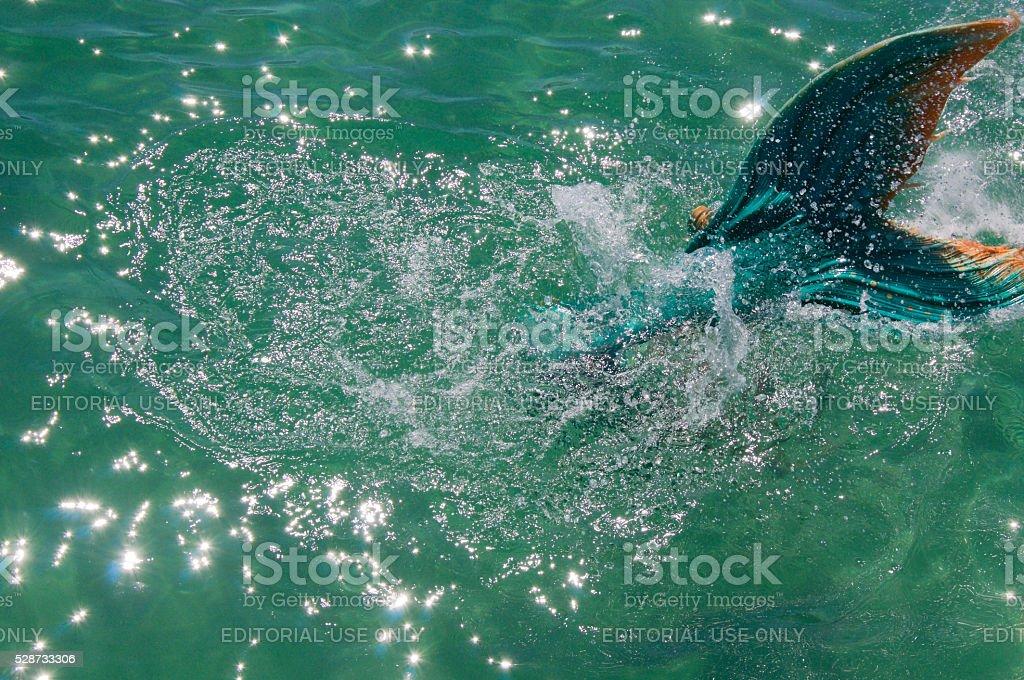 Mermaid Tail stock photo