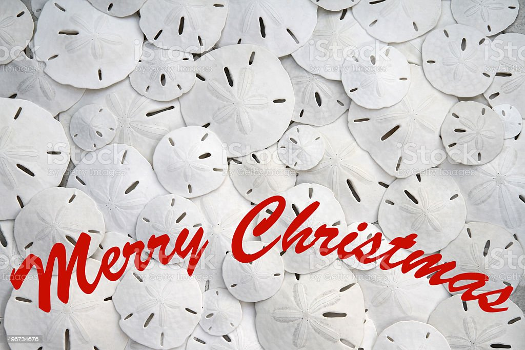 Merry Christmas card with background full of sand dollars stock photo