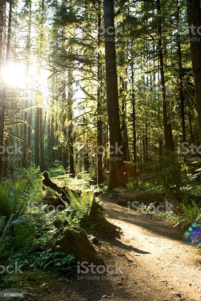 Merymere Falls Trail royalty-free stock photo
