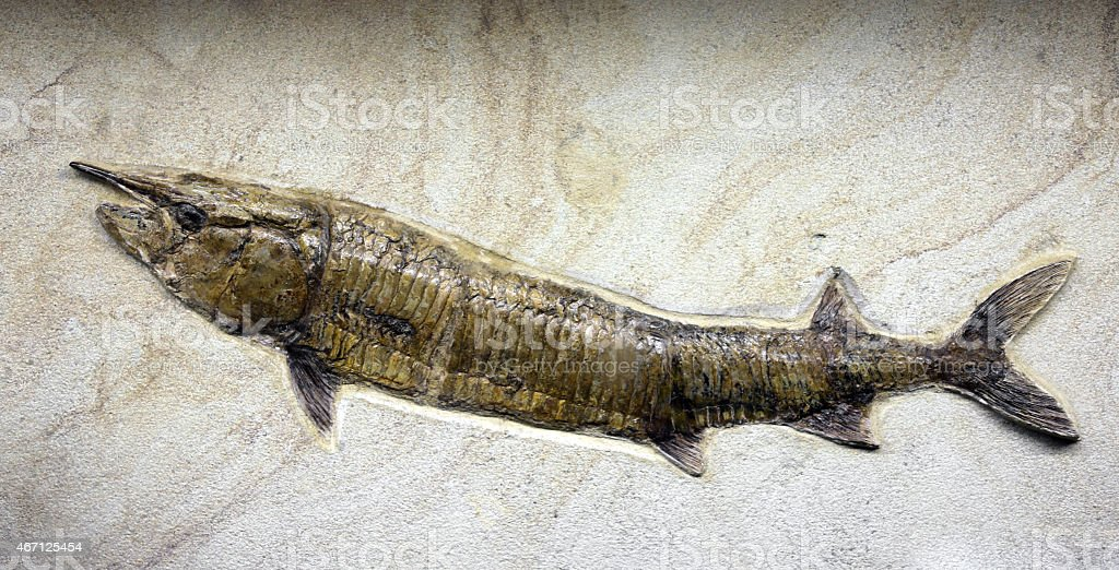 Mesozoic age fossil fish trapped in the rock stock photo