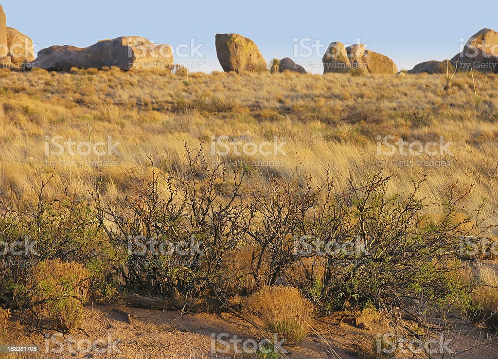 Mesquite at City of Rocks State Park royalty-free stock photo