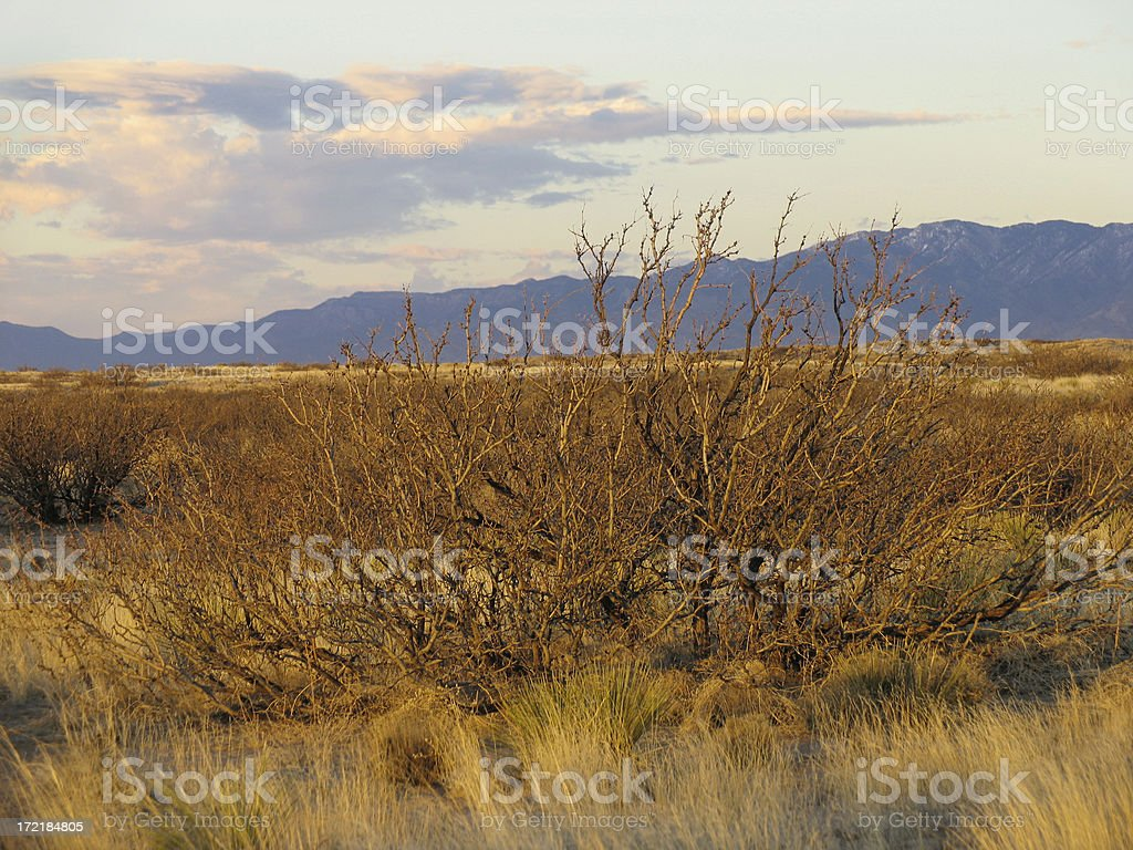 Mesquite at Dusk royalty-free stock photo