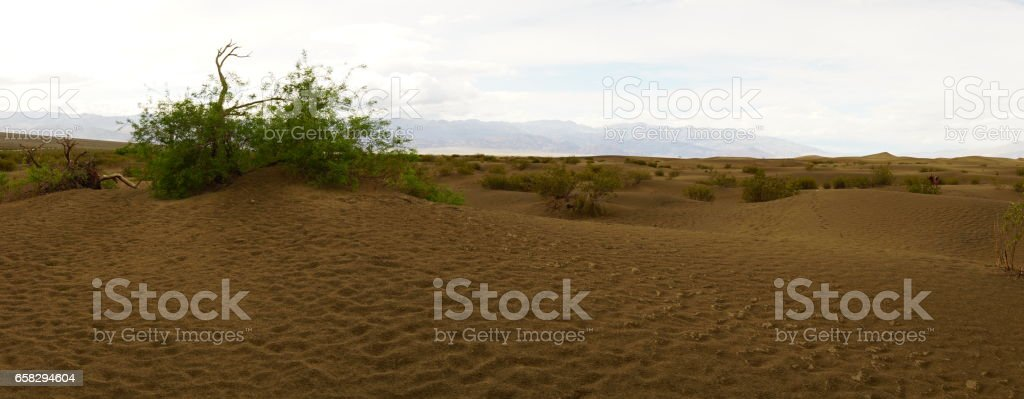 Mesquite sand dunes in Death Valley stock photo