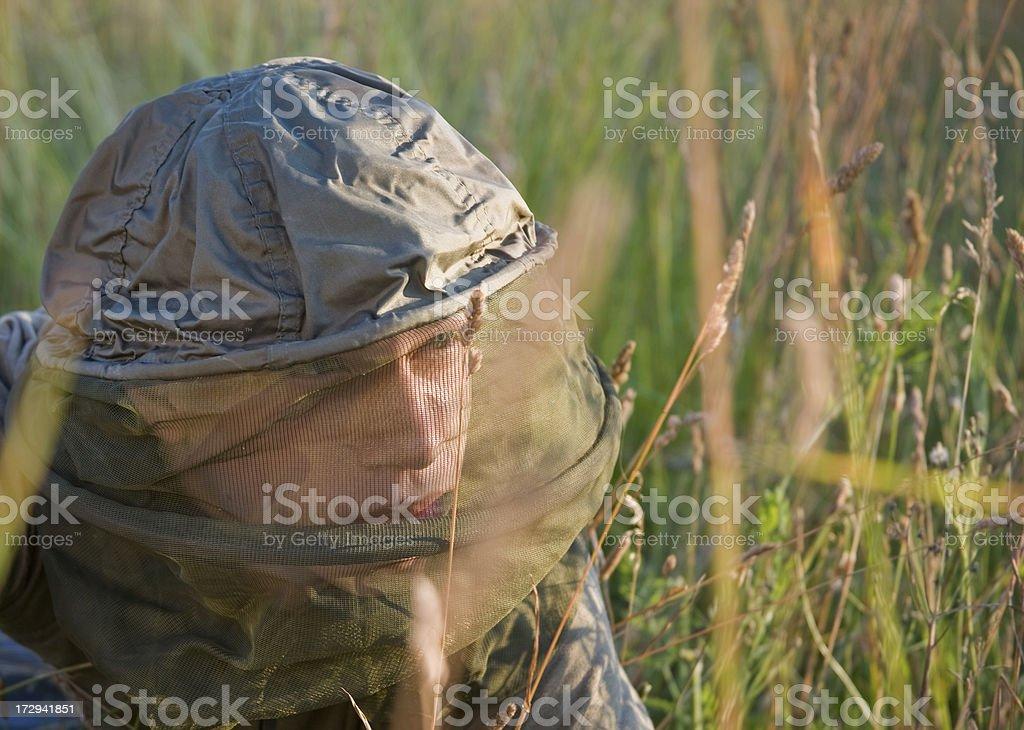 mesquito net stock photo