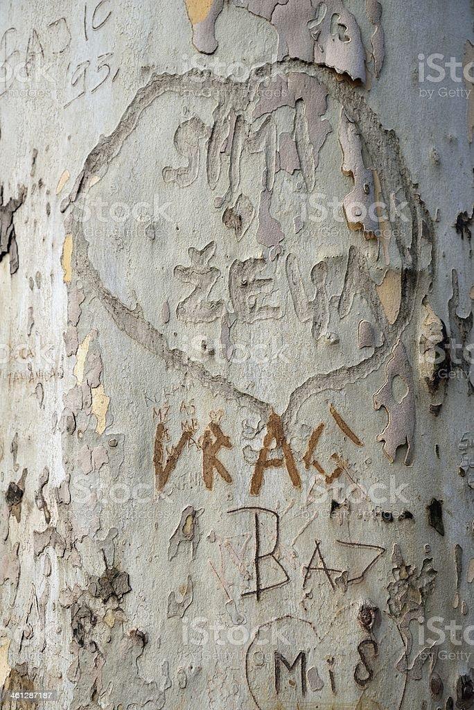 Message on bark tree stock photo