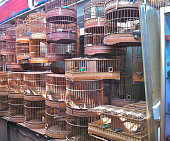 Metal Birdcages in Shanghai Bird Market