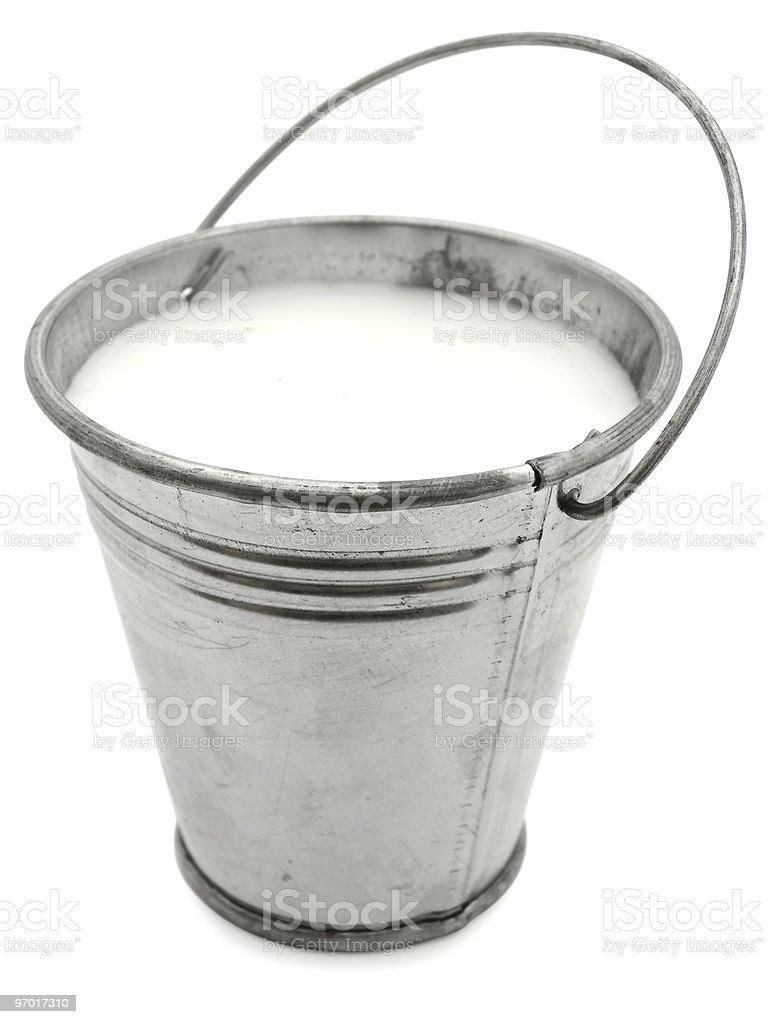 metal bucket with milk stock photo