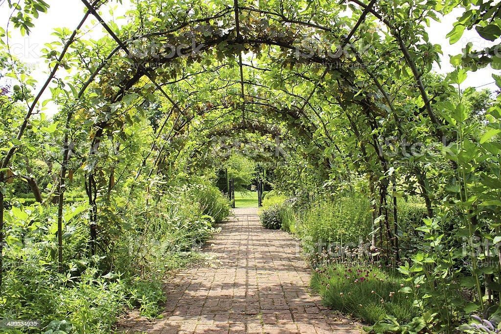 Metal pergola garden archway tunnel, block-paved brick pathway, grape vines stock photo
