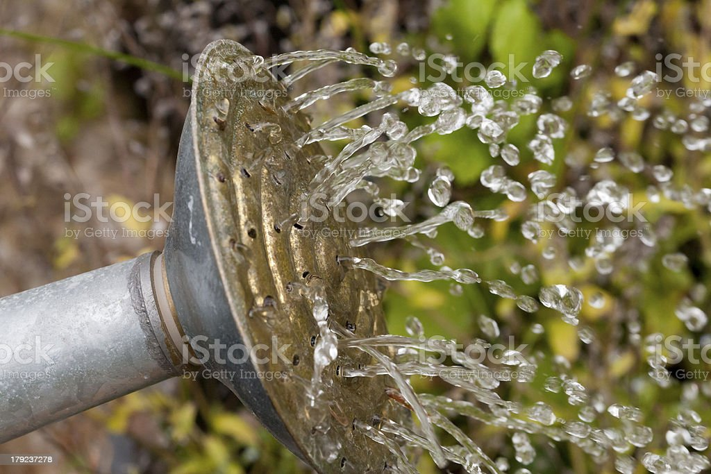 Metal watering can pouring water royalty-free stock photo