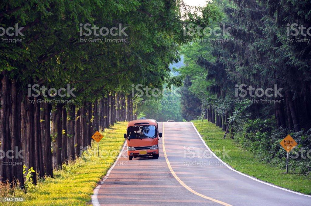 Metasequoia Tree-lined street stock photo