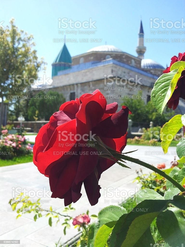 Mevlana dervish lodge and the rose stock photo