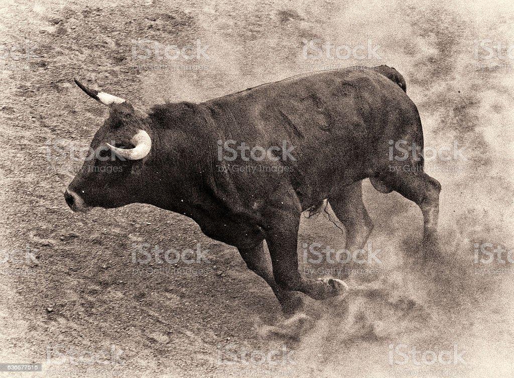 Mexican Bull stock photo