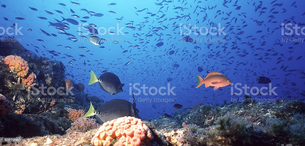Mexican Coral Reef stock photo