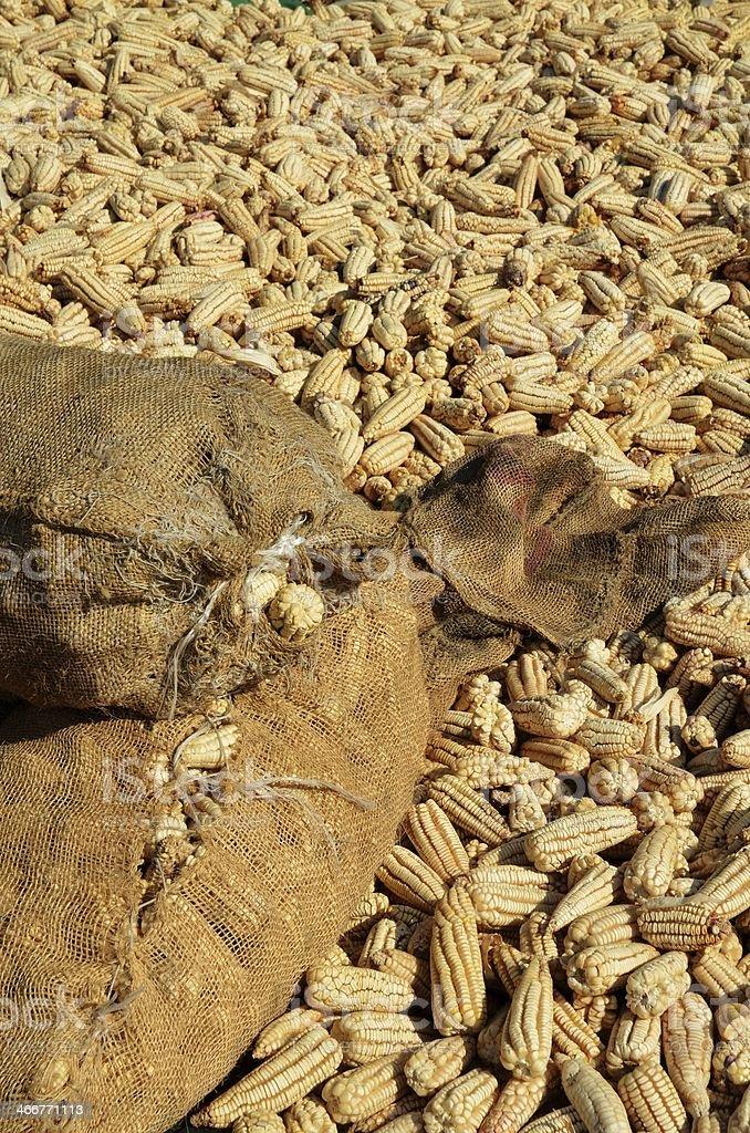 Мексиканский Cron Стоковые фото Стоковая фотография