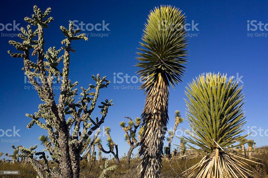 Mexican Desert Vegetation stock photo
