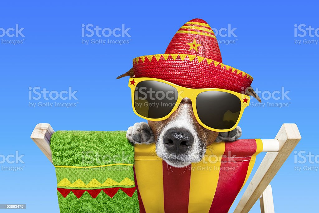mexican dog royalty-free stock photo