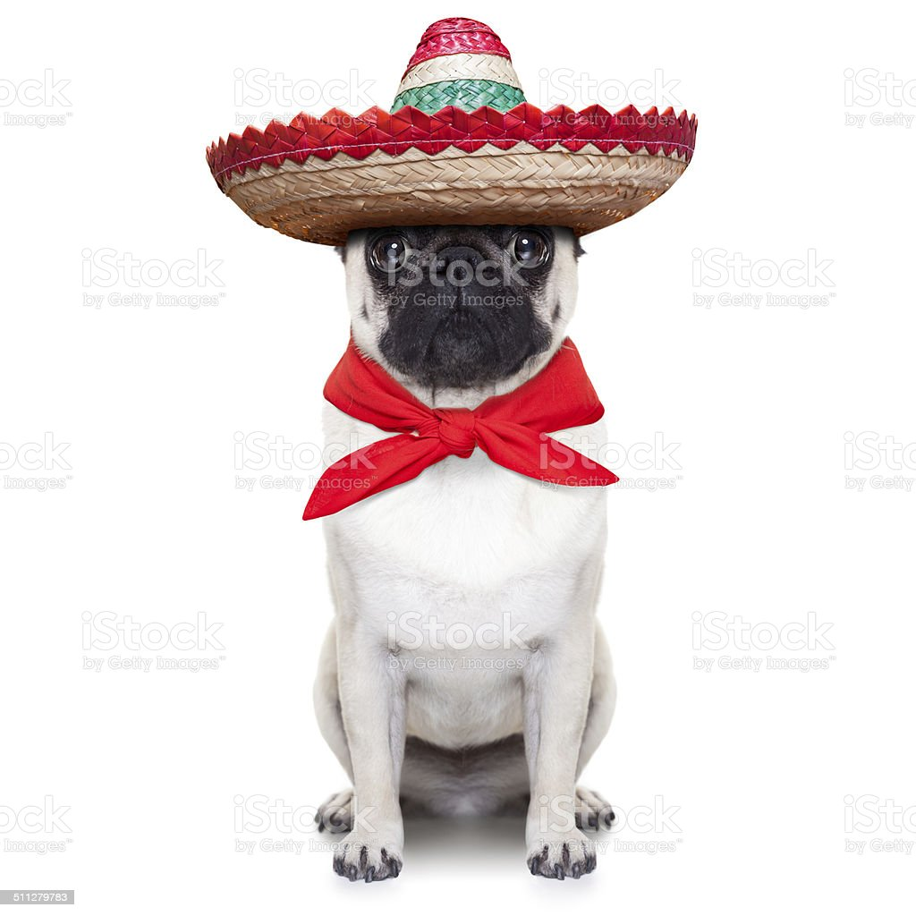 mexican dog stock photo
