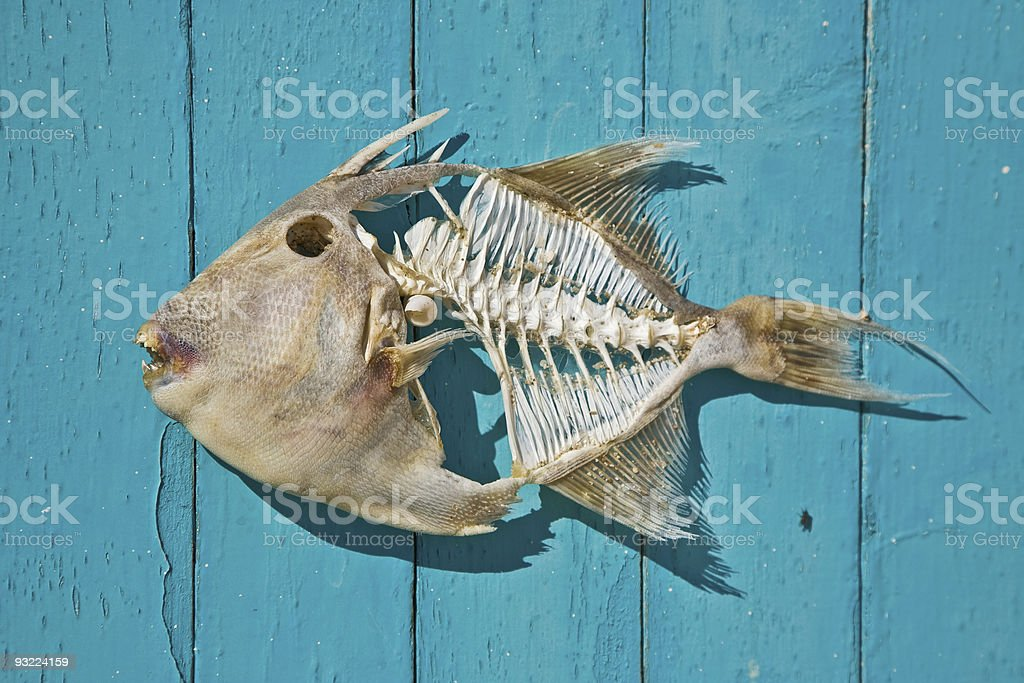 Mexican fish royalty-free stock photo