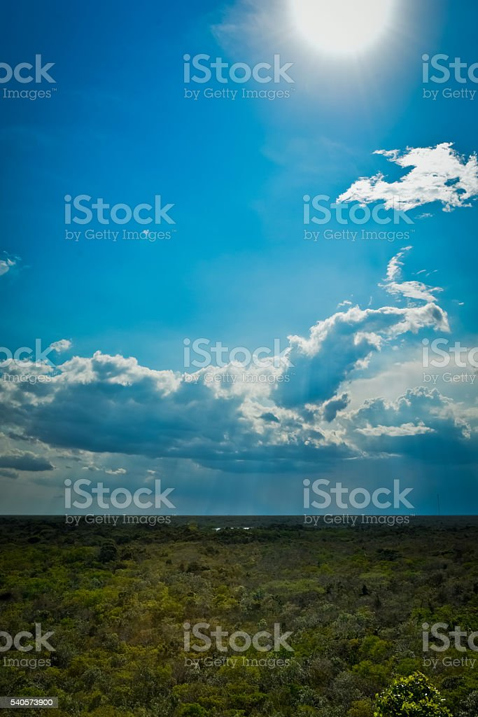 Mexican forest as seen from the top of the Coba ruins stock photo