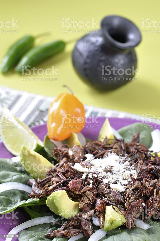 Mexican grasshopper salad stock photo
