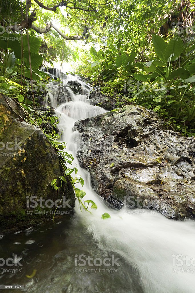 Mexican jungle of Yucatan royalty-free stock photo