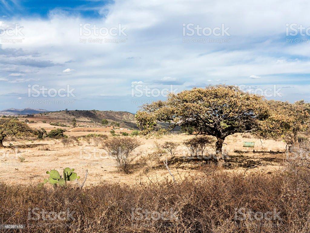 Mexican Landscape near Tlachichila stock photo