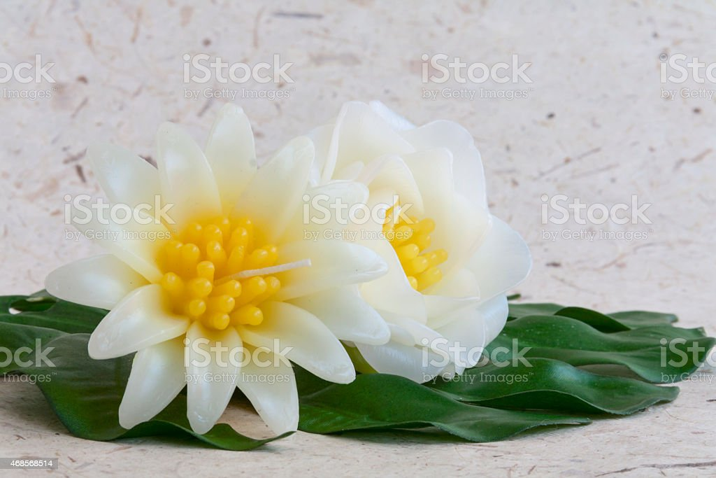 Mexican sunflower and Gardenia candle flower royalty-free stock photo