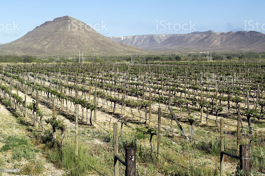 Mexican Vineyard stock photo
