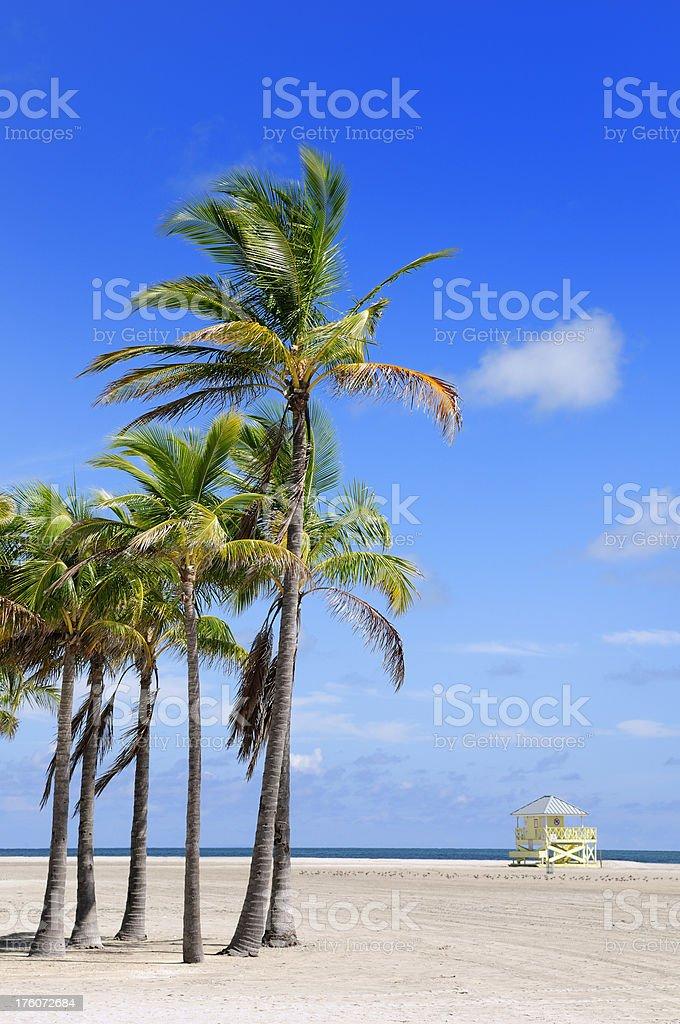 miami beach key biscayne area with palm trees stock photo