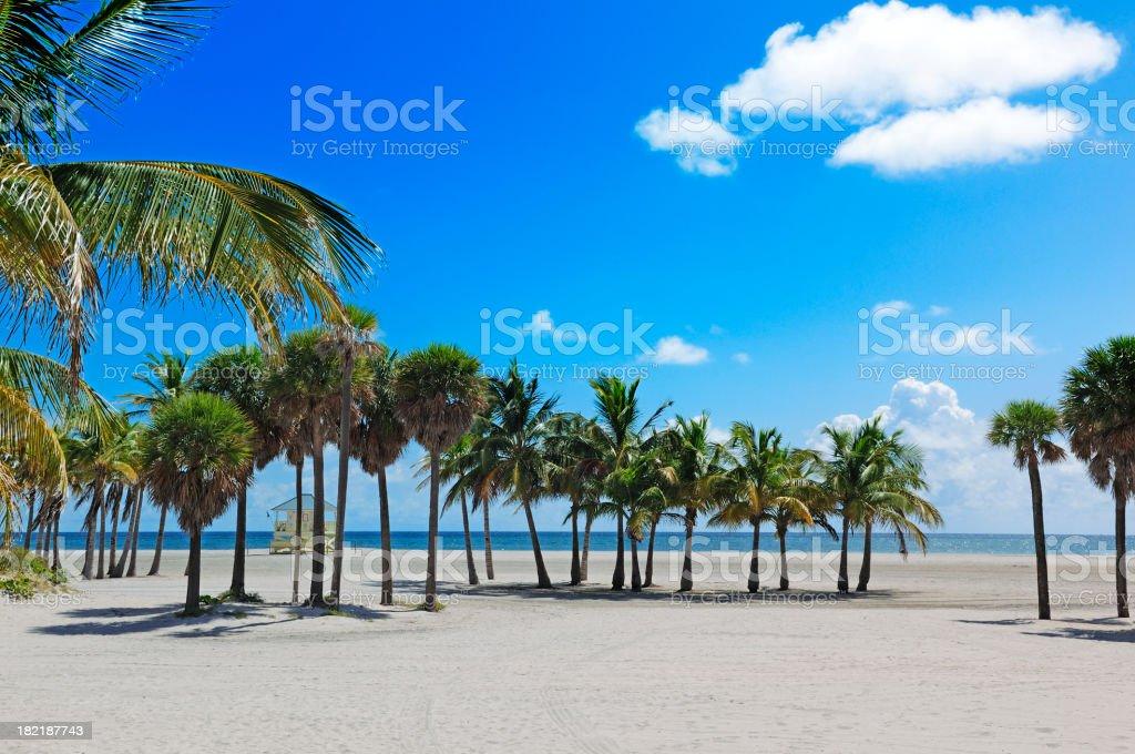 miami beach tropical paradise stock photo