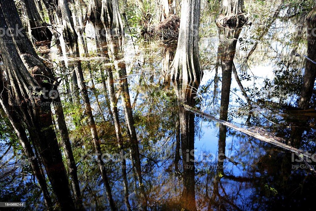Miami Everglade reflections royalty-free stock photo