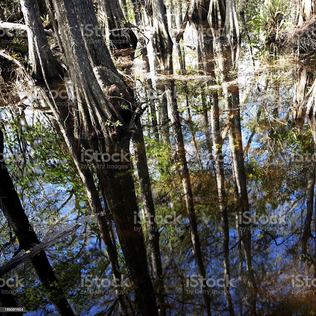 Miami Everglade reflections royalty-free stock photo
