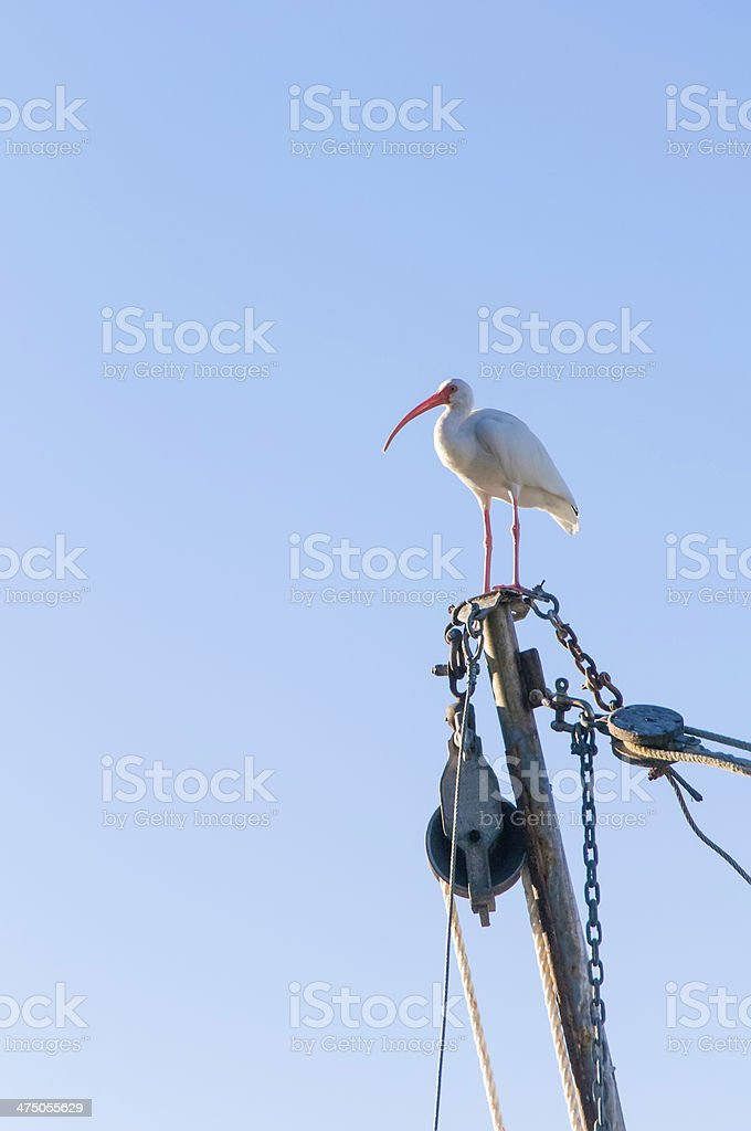 Miami shorebird stock photo