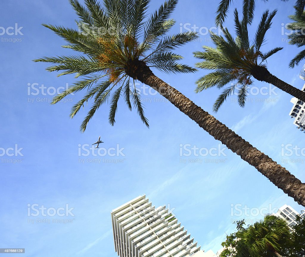 Miami Sky With Condo Highrise Palm Trees And Airliner Jet royalty-free stock photo