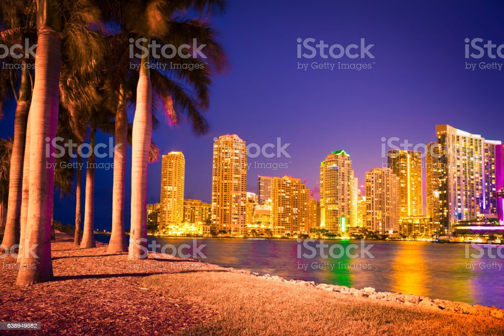 Miami Skyline Through Palm Trees stock photo