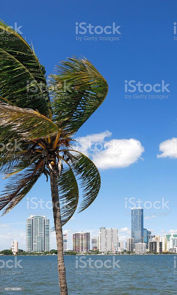 miami skyline with palm royalty-free stock photo